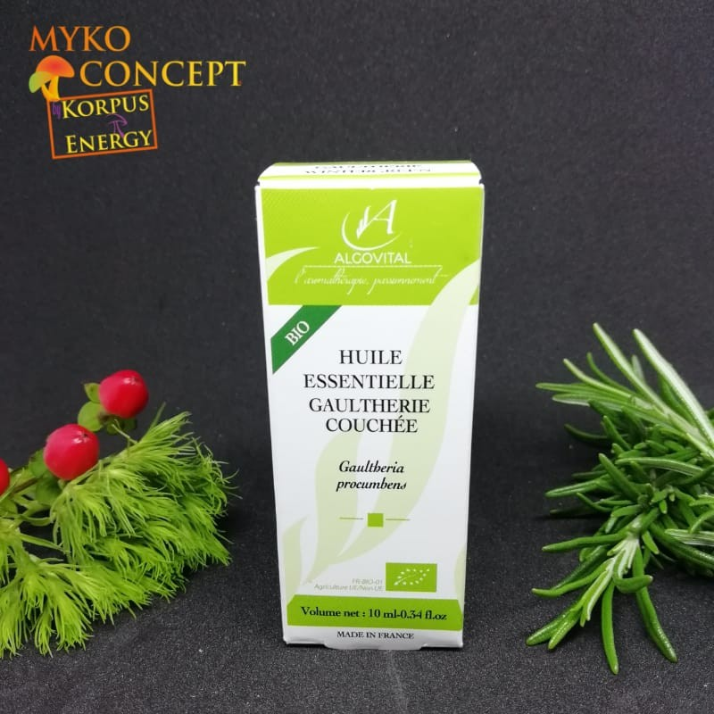 Gaultherie couchée - MykoConcept Suisse