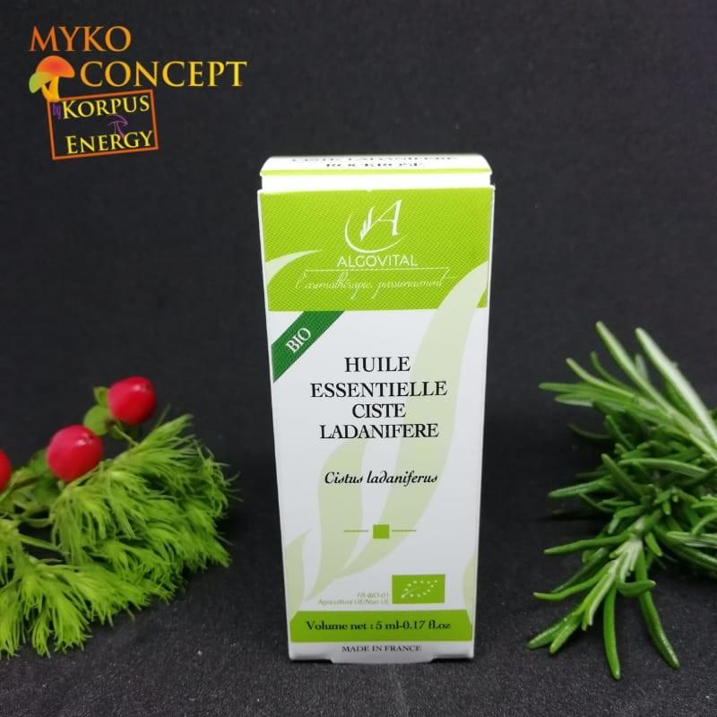 Ciste ladanifère - MykoConcept Suisse