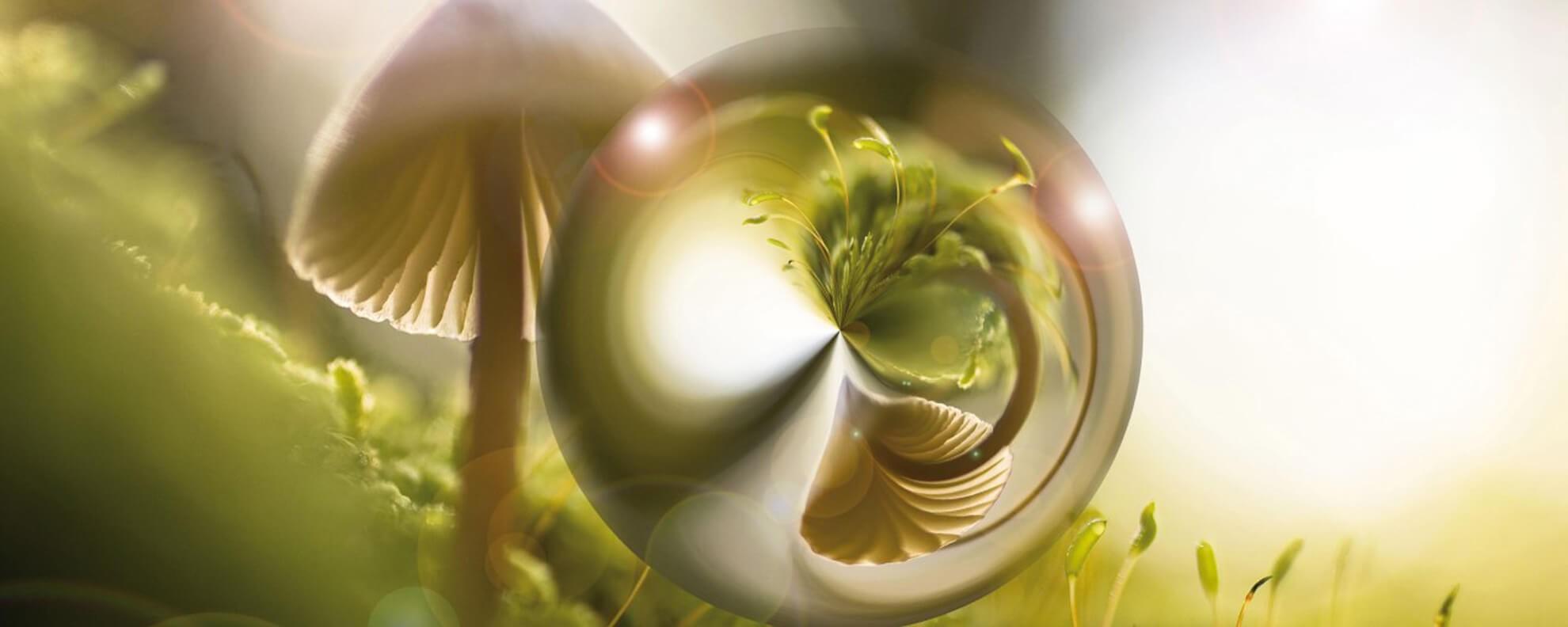 Micoterapia - La medicina naturale dei funghi